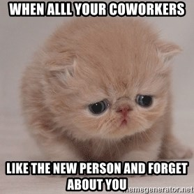Super Sad Cat - When alll your coworkers like the new person and forget about you