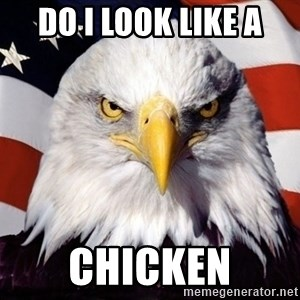 American Pride Eagle - do i look like a chicken
