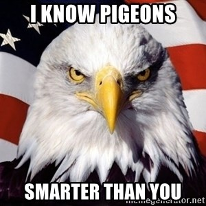 American Pride Eagle - i know pigeons smarter than you
