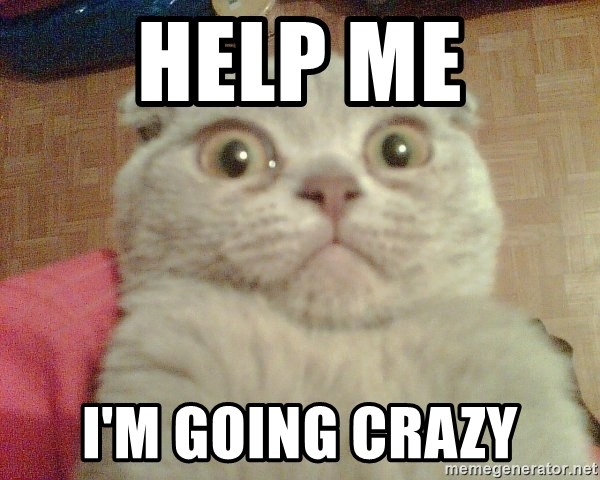 GEEZUS cat - HELP ME I'M GOING CRAZY