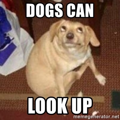 31220207 dogs can look up oh you dog meme generator