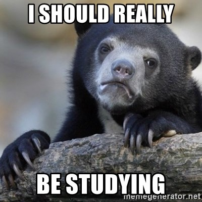 Confession Bear - I should really Be studying