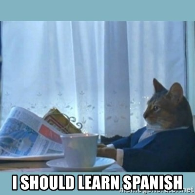 rich cat  - I should learn spanish
