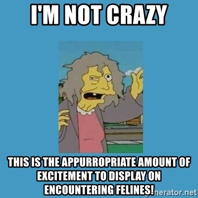 crazy cat lady simpsons - I'm not crazy this is the appurropriate amount of excitement to display on encountering felines!