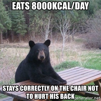 Patient Bear - Eats 8000Kcal/day stays correctly on the chair not to hurt his back