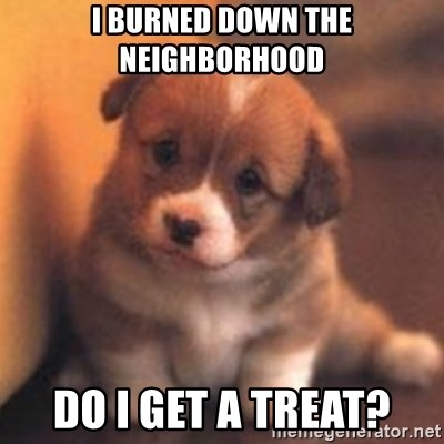 cute puppy - i burned down the neighborhood do i get a treat?
