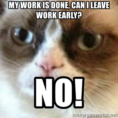 angry cat asshole - My work is done, can i leave work early? no!
