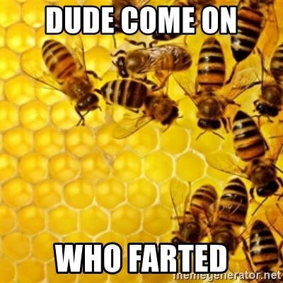 Honeybees - DUDE COME ON  WHO FARTED