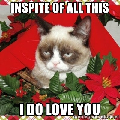 Grumpy Christmas Cat - inspite of all this I do love you