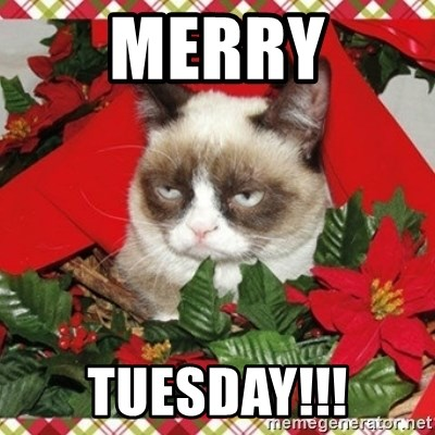 Grumpy Christmas Cat - Merry tuesday!!!