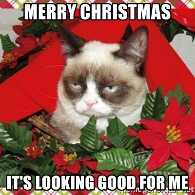 Grumpy Christmas Cat - MERRY CHRISTMAS  IT'S LOOKING GOOD FOR ME