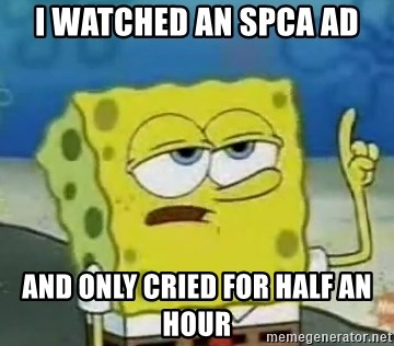 Tough Spongebob - I watched an SPCA ad And only crieD for half An hour