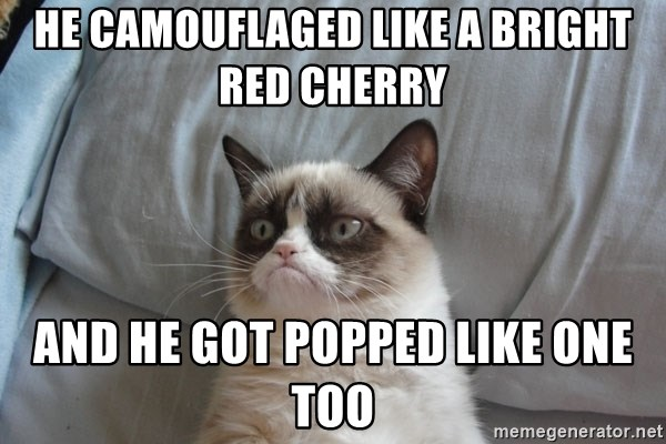 Grumpy cat good - He camouflaged like a Bright Red Cherry And he got Popped like One too