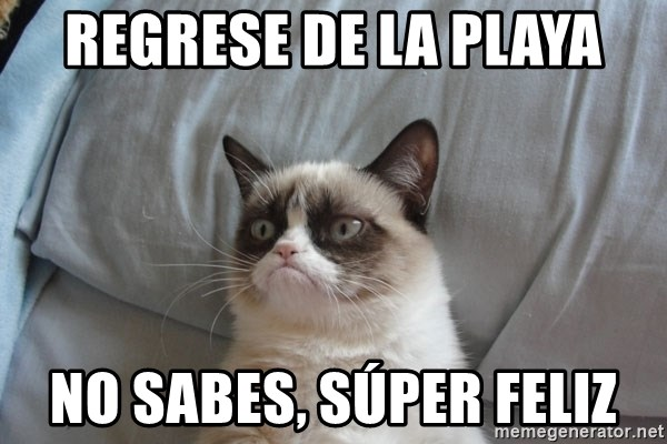 Grumpy cat good - Regrese de La playa No sabes, súper feliz