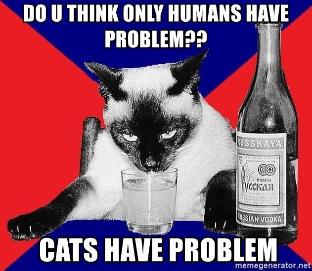 Alco-cat - Do u think only humans have problem??  cats have problem