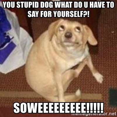 Oh You Dog - YOU STUPID DOG WHAT DO U HAVE TO SAY FOR YOURSELF?! SOWEEEEEEEEE!!!!!