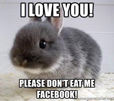 ADHD Bunny - i love you! please don't eat me facebook!