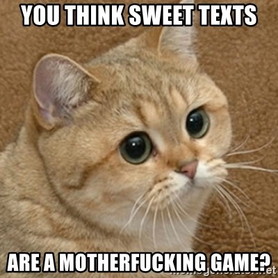 motherfucking game cat - You think sweet texts Are a motherfucking game?