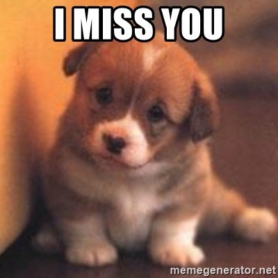 cute puppy - I MISS YOU