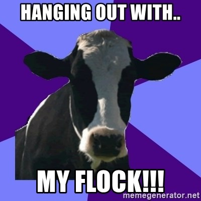 Coworker Cow - Hanging out with.. MY FLOCK!!!