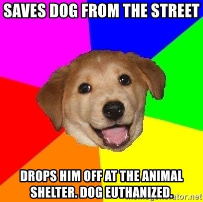Advice Dog - Saves dog from the street  drops him off at the animal shelter. dog euthanized.