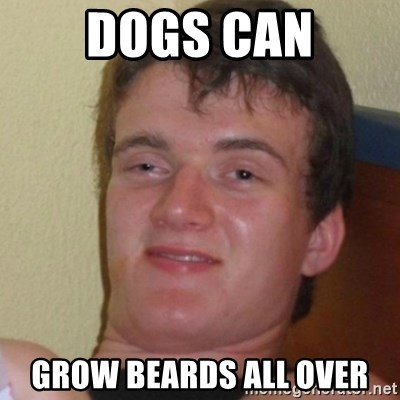 Stoner Stanley - Dogs can grow beards all over