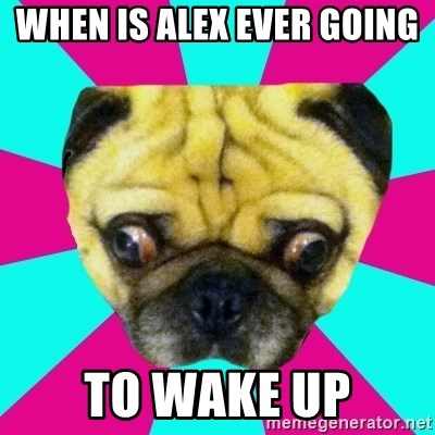 Perplexed Pug - When is Alex ever going  to wake up