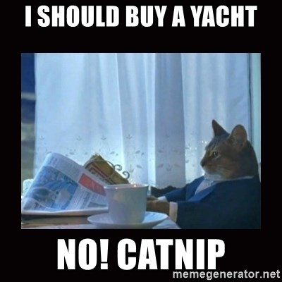 i should buy a boat cat - i should buy a yacht no! Catnip