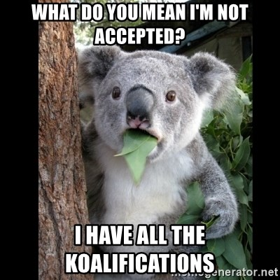 Koala can't believe it - what do you mean i'm not accepted? i have all the koalifications