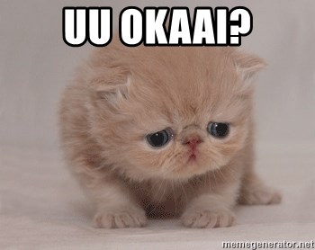Super Sad Cat - uu okaai?