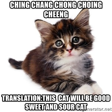 fyeahpussycats - ching chang chong choing cheeng translation:this  cat will be good sweet and sour cat