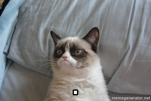 Grumpy cat good -                                                                                                     .