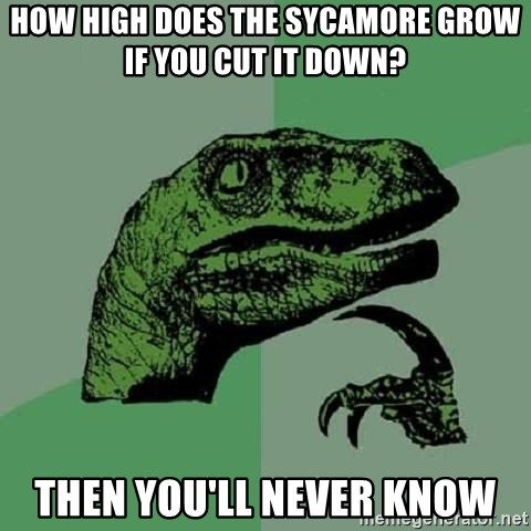 Philosoraptor - How high does the sycamore grow if you cut it down? then you'll never know