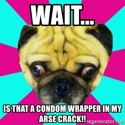 Perplexed Pug - WAIT... Is that a condom wrapper in my arse crack!!
