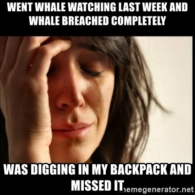 First World Problems - went whale watching last week and whale breached completely was digging in my backpack and missed it