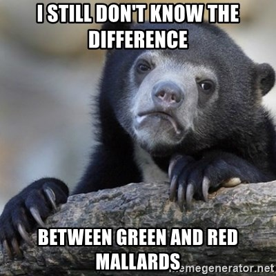Confession Bear - I still don't know the difference between green and red mallards