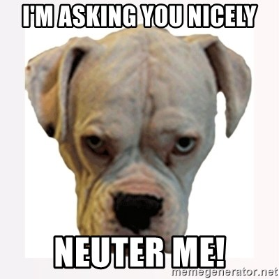stahp guise - I'M ASKING YOU NICELY NEUTER ME!