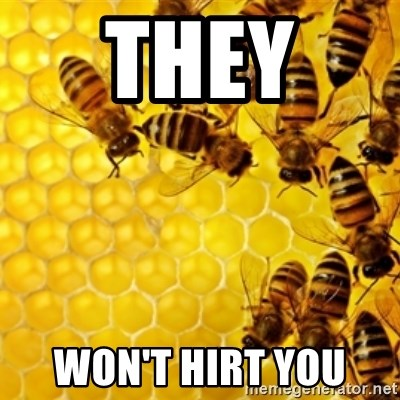 Honeybees - THEY  WON'T HIRT YOU