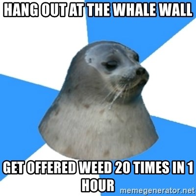 Victoria BC Seal - Hang out at the whale wall Get offered weed 20 times in 1 hour