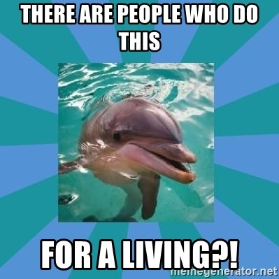 Dyscalculic Dolphin - there are people who do this for a living?!