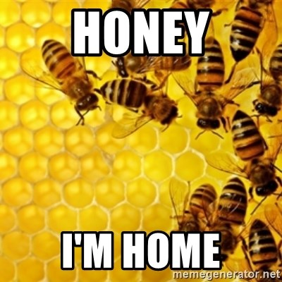 Honeybees - HONEY I'M HOME