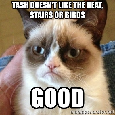 Grumpy Cat  - TASH DOESN'T LIKE THE HEAT, STAIRS OR BIRDS good