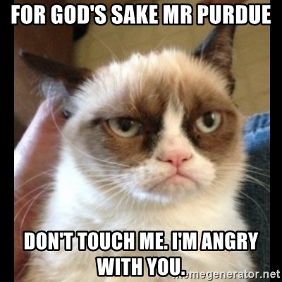 Frown Cat - for god's sake mr purdue don't touch me. i'm angry with you.