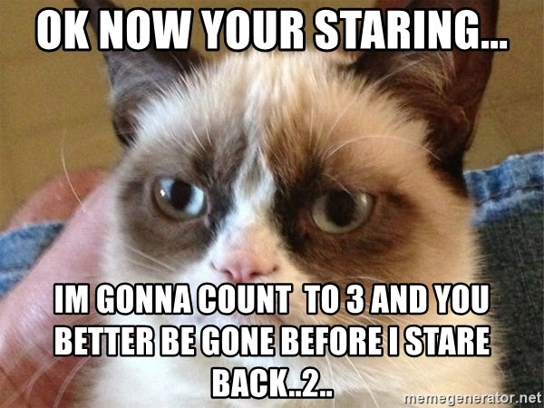 Angry Cat Meme - ok now your staring... im gonna count  to 3 and you better be gone before i stare back..2..