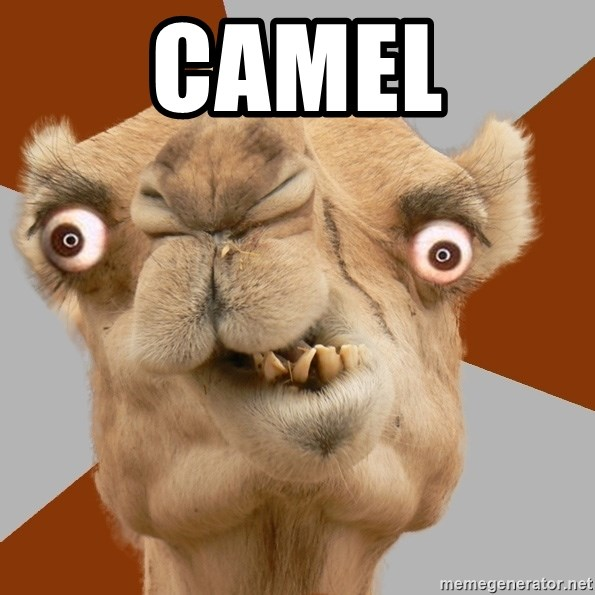 Crazy Camel lol - CAMEL