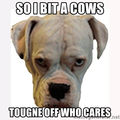 stahp guise - SO I BIT A COWS TOUGNE OFF WHO CARES