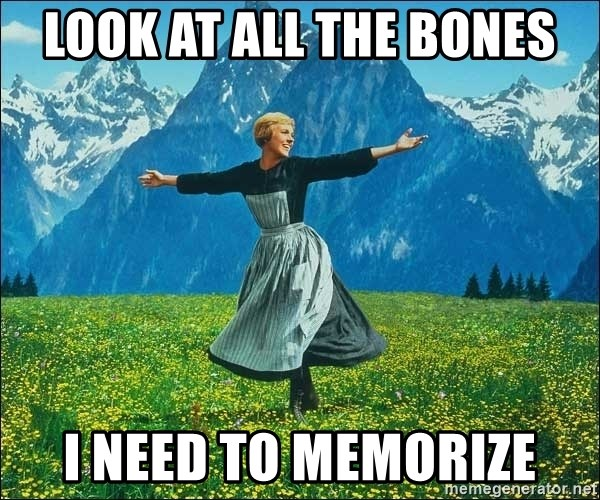 Look at all the things - look at all the bones i need to memorize