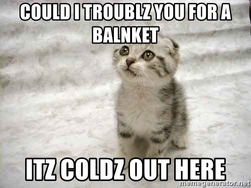 The Favre Kitten - COULD I TROUBLZ YOU FOR A BALNKET ITZ COLDZ OUT HERE