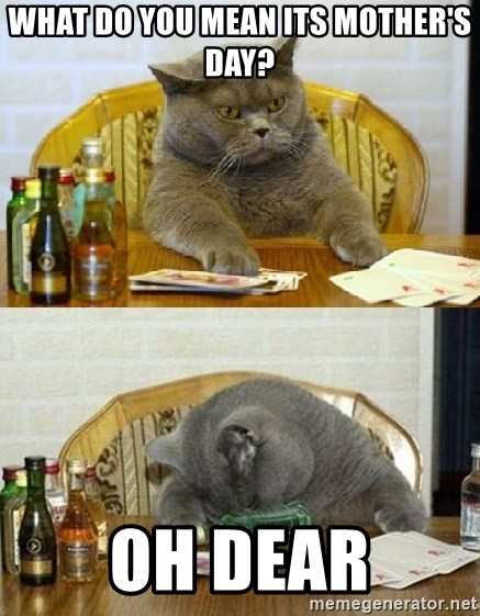 Poker Cat - What do you mean its mother's day? Oh dear