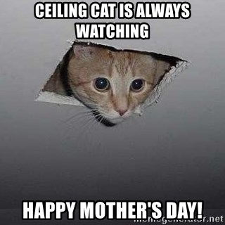 Ceiling cat - Ceiling cat is always watching Happy mother's day!